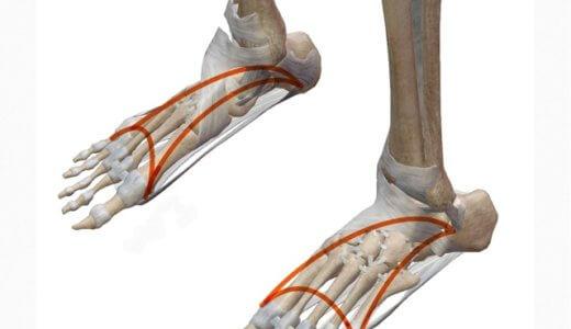 足底筋膜炎を治す上での大切な考え方。