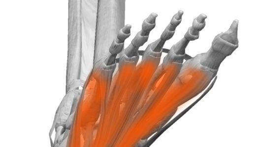骨棘は痛みの原因ではない?