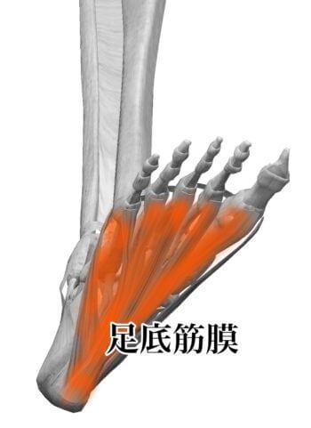 足の痛みと踵骨棘